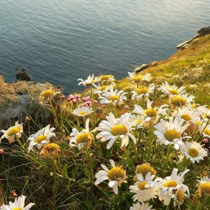 Coastal Area Wild flower seed mix