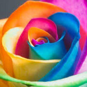 Rare Rose Seeds